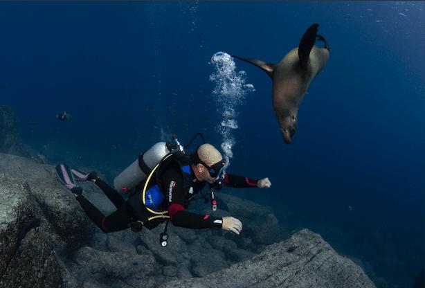 Playfull sea lion