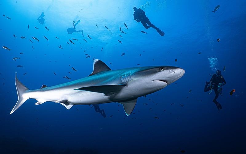 shark Isla Socorro