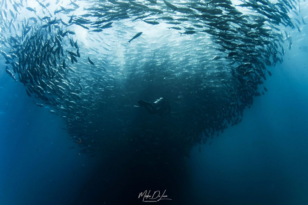 diving Sea of Cortez