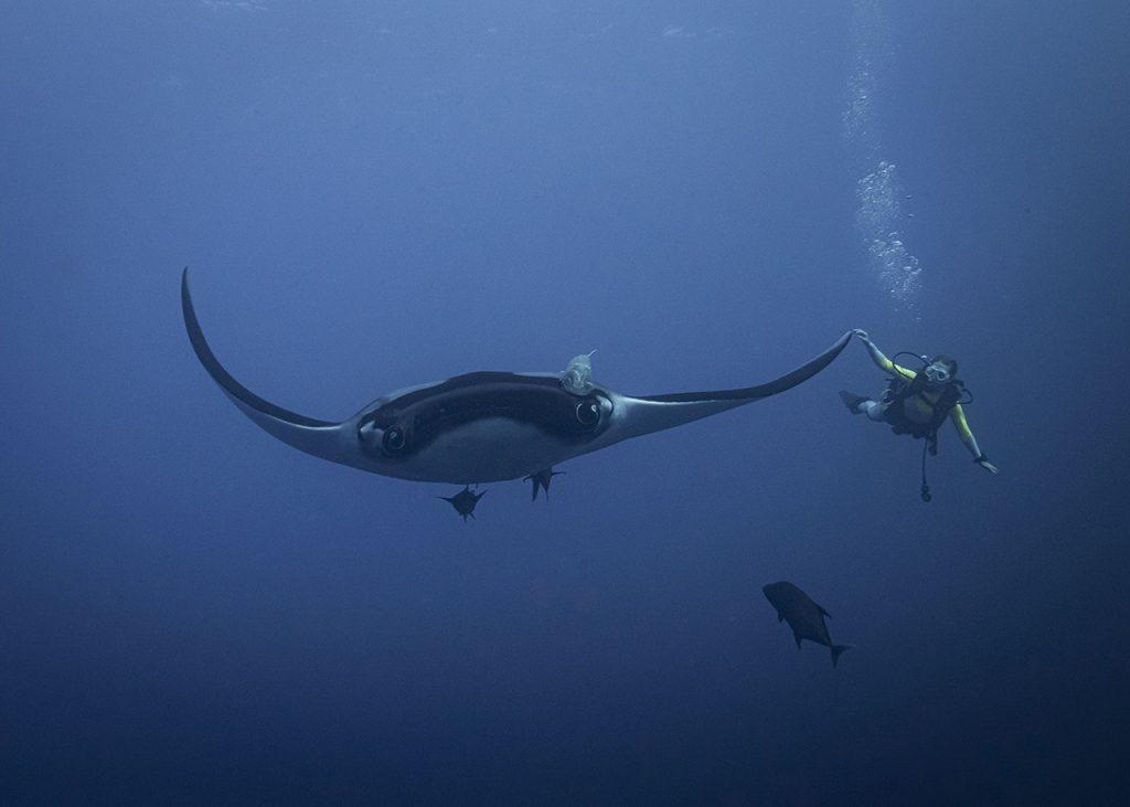 manta ray with diver Socorro