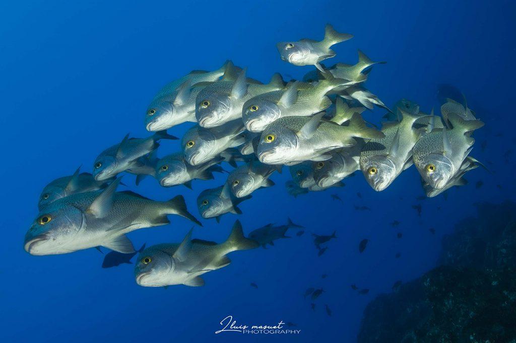 school of fish socorro