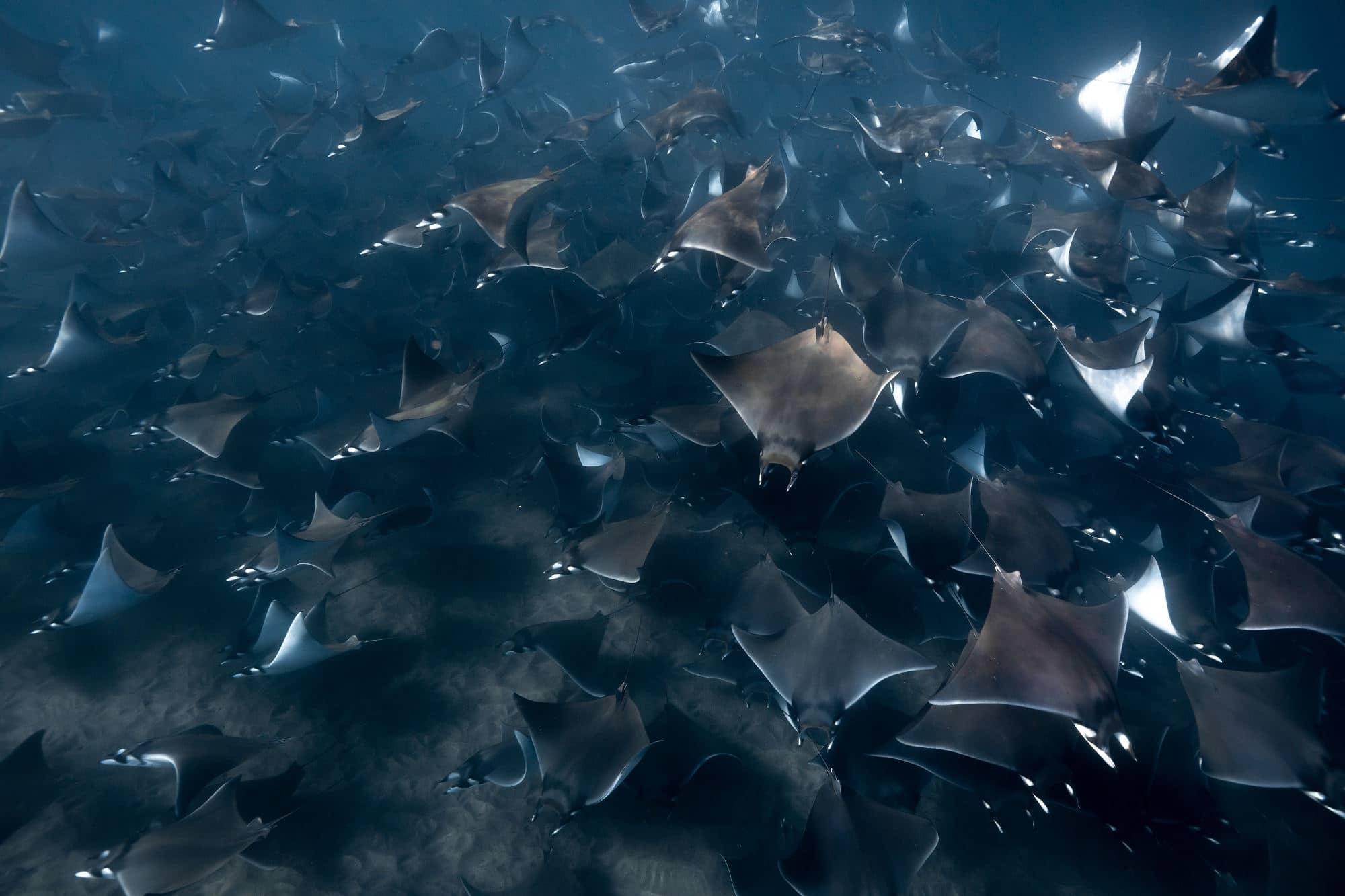 Orcas Sea Of Cortez