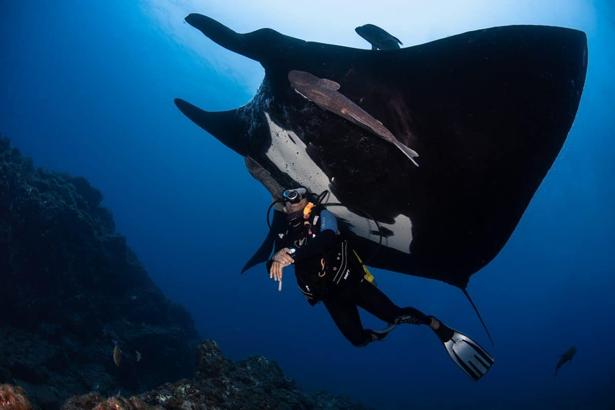 The Importance of Tourism: Manta Ray Conservation