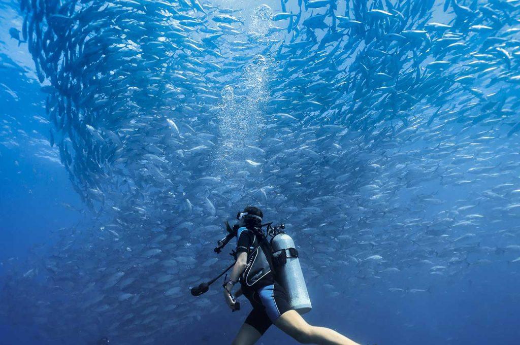 diving sea of cortez