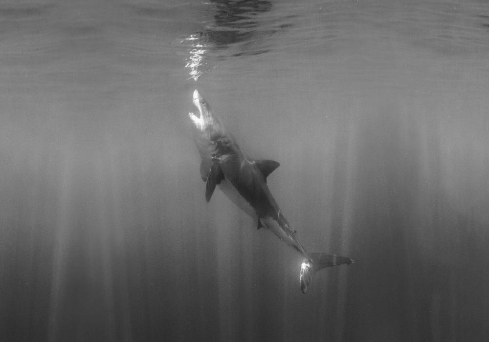 Guadalupe - © Mark Davidson