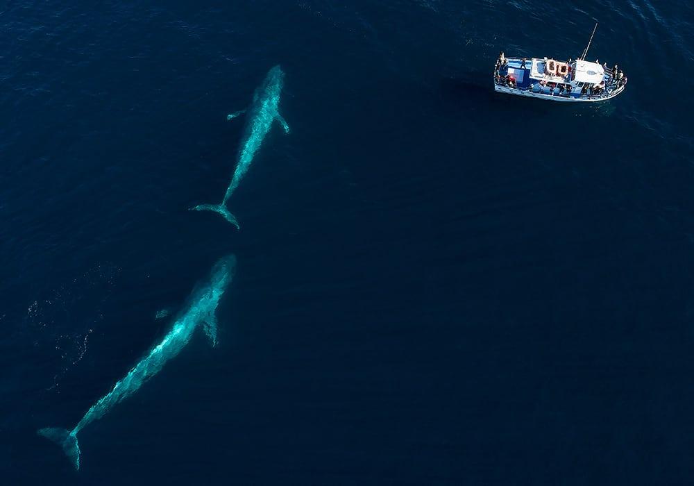 Loreto, Blue Whales