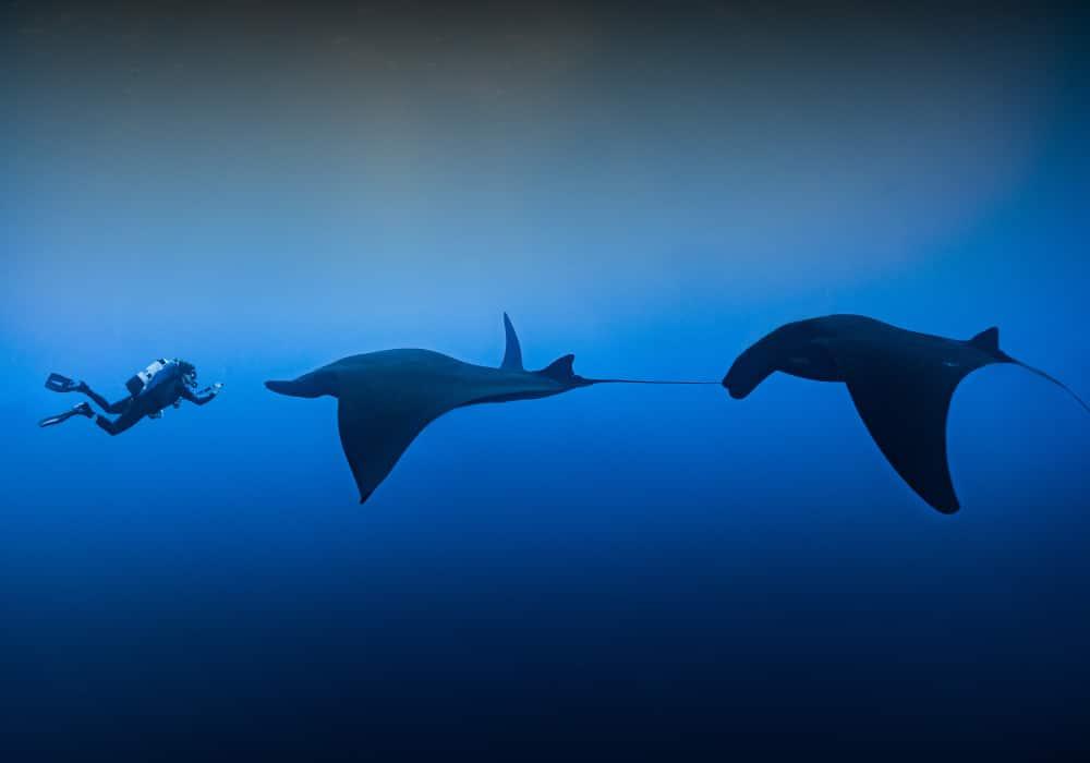 Socorro, Giant Mantas - © Daniel Versteeg