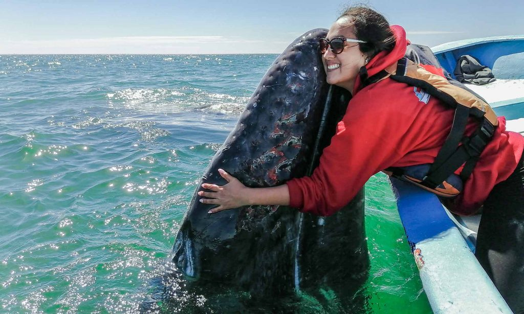 hugging whale