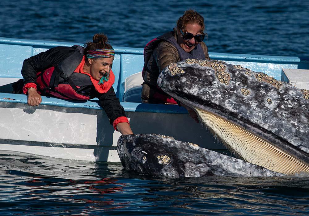 San Ignacio Lagoon & Magdalena Bay, Gray Whale Interaction - © Scott Davis