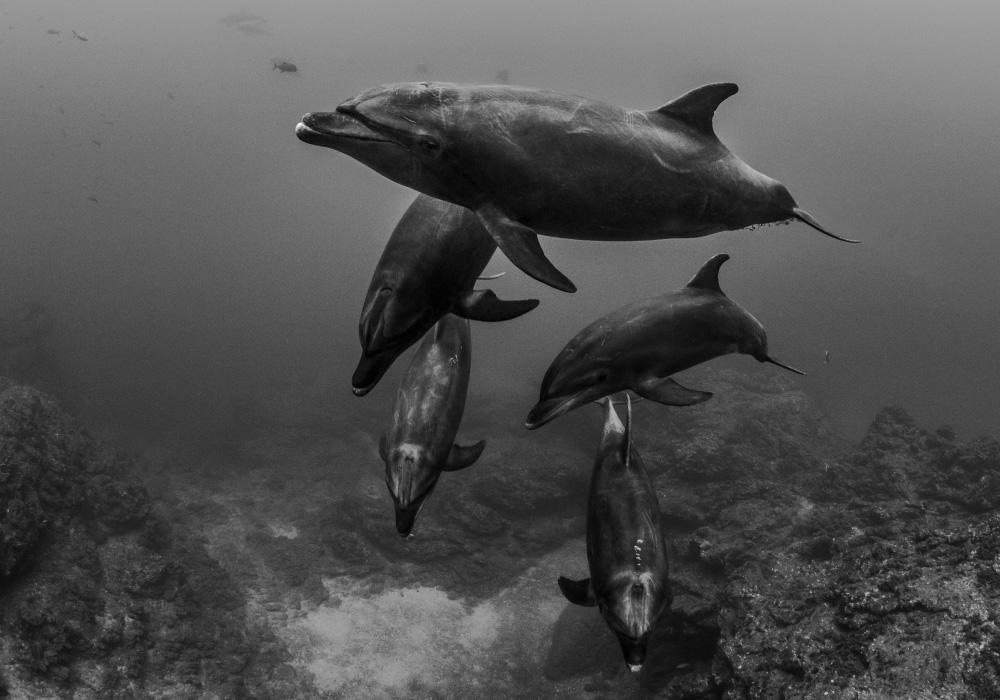 Socorro - Dolphins - © Dany Taylor