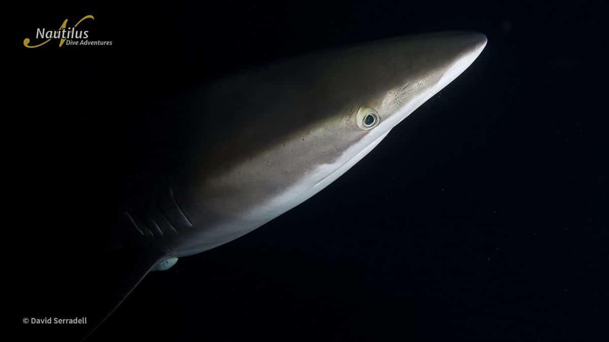 When is Shark Week 2021?
