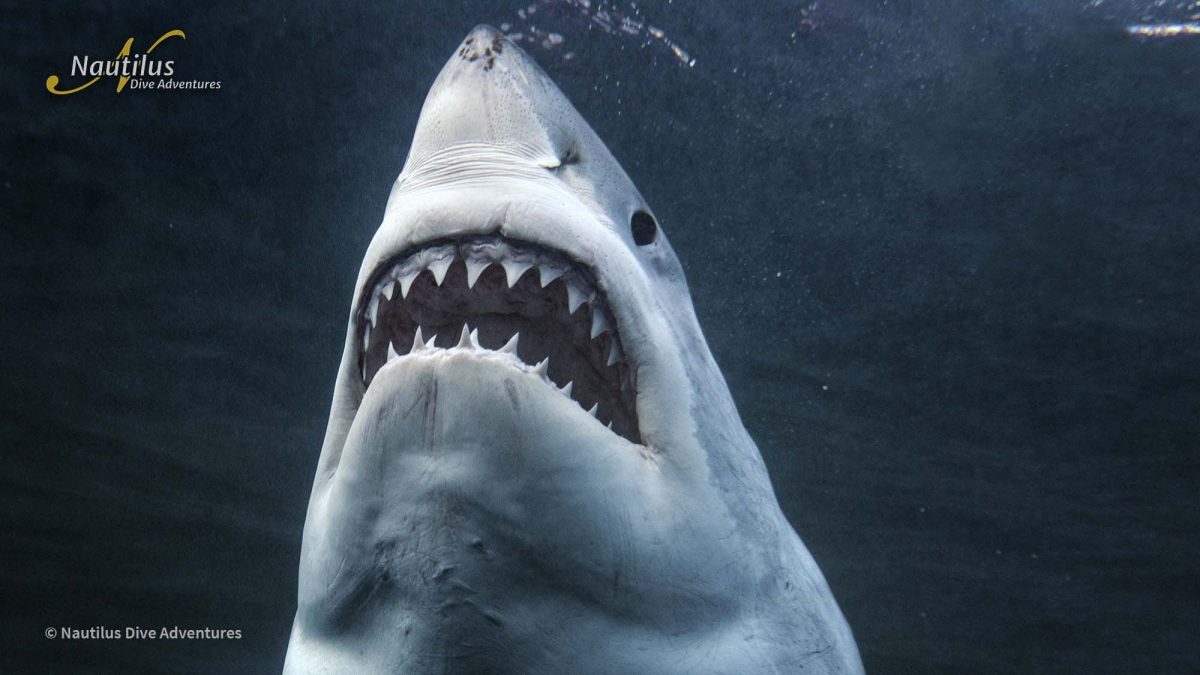 The Great White Whisperer: Andy Casagrande